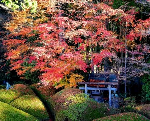 Koyasan - giardino dello Shukubo